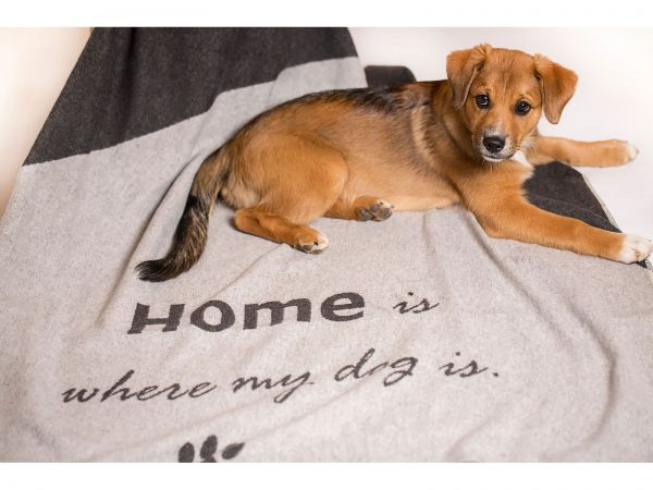 Haustierdecke Home is where my dog is 6823